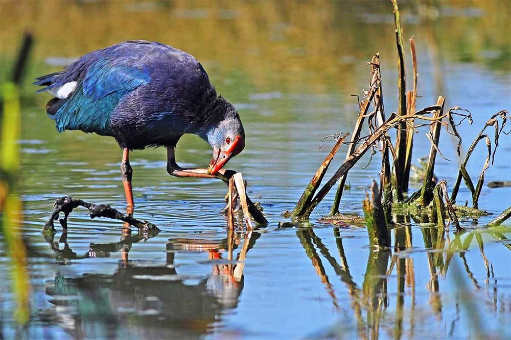 Dünya Mirası Listesindeki Kızılırmak Deltası